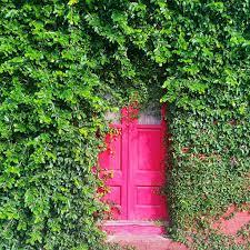 red light cameras in green cove springs red door ivy an overgrown door on a narrow sidewalk on b flickr