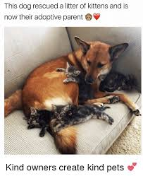 Kittens Memes - this dog rescued a litter of kittens and is now their adoptive