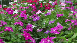 choosing beautiful flowers to plant in garden at local