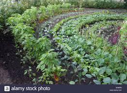 226 best potager the modern kitchen garden images on pinterest