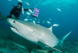 amazing diving stories ocean leisure diving and photography blog