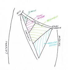 lower limb anatomy the femoral triangle pondering em