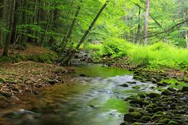 free picture wood nature water forest landscape leaf river