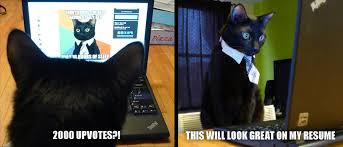 Cat Laptop Meme - irti funny picture 3973 tags business cat upvotes looking