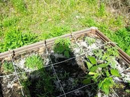 my backyard vegetable garden backyard and yard design for village