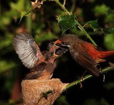 wildlife photography tips birds youtube