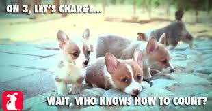 Corgi Puppy Meme - community post irresistible corgi puppy memes corgi memes and