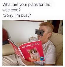Cat Lady Meme - cat lady life meme by allyovaries420 memedroid