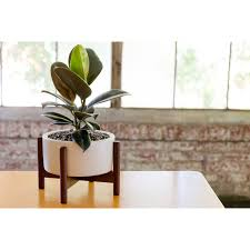 desk planter case study desk top cylinder planter with wood stand modernica