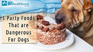 are onions for dogs 5 foods that are dangerous to dogs pethealthcare co