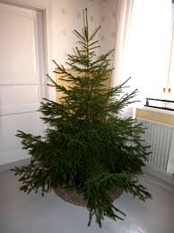 file tree without ornaments jpg wikimedia commons