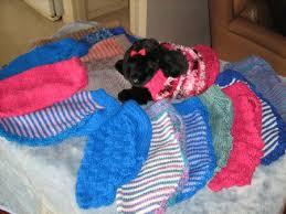sherzam toy u0026 standard poodles