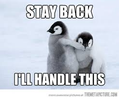 Cute Penguin Meme - protective penguin picture comments baby penguins and penguins