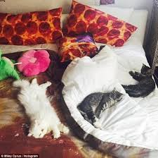 Pizza Duvet Taylor Swift And Miley Cyrus Reveal Interiors Taste On Instagram