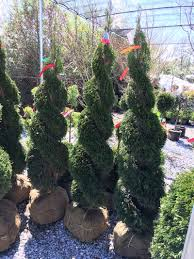 Pre Lit Topiary Topiary Trees Topiary Forms Live U0026 Artificial Indoor U0026 Outdoor