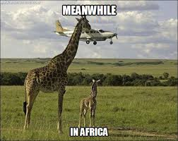 Africa Meme - meanwhile in africa what s meme