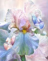 iris goddess of serenity by romanceworks mixed medium flowers plants