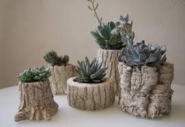 products u2013 plants u0026 pots moss