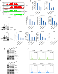 a runx2 mediated epigenetic regulation of the survival of p53