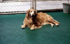Best Flooring With Dogs 5 Best Kennel Floorings Reviewed To Make Sure Your Pet Is Safe