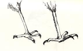 international sketchcrawl stuffed bird feet from the museum of