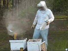 Raising Bees In Backyard by Hive Beetle Larvae Oysters U0026 Pearls Beekeeping Pinterest