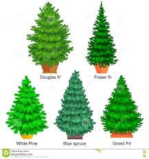 set of potted vector tree like fir or pine blue spruce