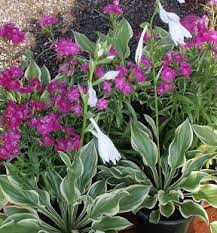best 25 florida flowers ideas on pinterest florida gardening