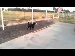 Dog with a BIG bone