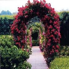 Plants For Pergolas by 2m Garden Steel Rose Arch Trellis Ivys Climbing Plants In Arches