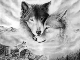 imagenes de fondo de pantalla lobos fondos de pantalla lobo fondos de pantalla
