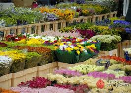 wholesale fresh flowers 73 best flower delivery melbourne melbourne fresh flowers images
