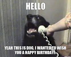 Birthday Meme Dog - happy birthday animal meme 15 happy birthday meme s