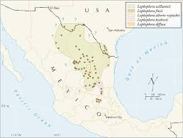 Map Of Zacatecas Mexico by Lophophora Geographic Distribution Of Peyote Lophophora