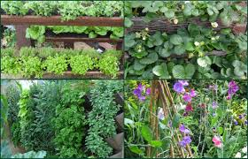 simple and beautiful ideas for a vertical vegetable garden