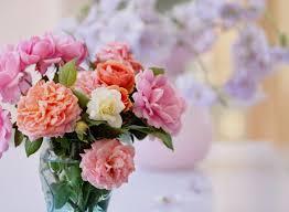 send flowers cheap send flowers cheap lovely send flowers cheap wallpaper garcinia