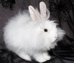 rabbit material angora rabbit nancy elizabeth designs