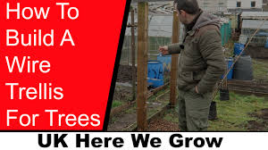 how to make a wire trellis to support trees youtube