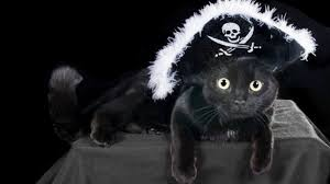 Halloween Costumes Cat Hat 20 Cat Halloween Costume Ideas Pictures Cattime