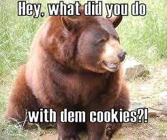Funny Bear Meme - bear meme