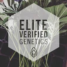 Wedding Cake Genetics Elite Verified Genetics Eliteverifiedgenetics Instagram