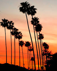 Hollywood Home Decor Los Angeles Photography Hollywood Palm Trees L A Photograph