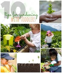 gardening with toddlers 10 tips