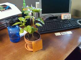 moose office politics u2013 the basil plant on my desk