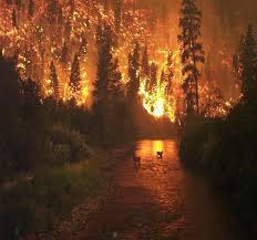 Lighting Farts On Fire 42 Best Fire Images On Pinterest Forests Fire And Fire