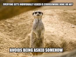 Mere Cat Meme - cat meerkat meme meerkat best of the funny meme