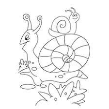 10 amazing snail coloring pages toddler