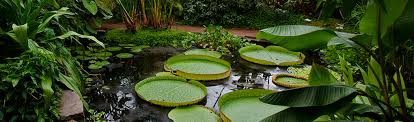 Botanic Gardens Dundee Photography Courses Dundee Workshops Classes Lessons