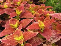 best shades of orange 100 shade of orange names sunset orange nowathome shades of