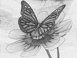 pencil sketches of butterflies on flowers drawing of sketch